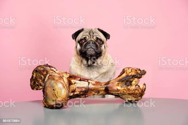 Bones for dogs can be dangerous picture id954970664?b=1&k=6&m=954970664&s=612x612&h=7y0iuhjk5 5umbacuhjhfdwsdmvygkzajganviayzy8=
