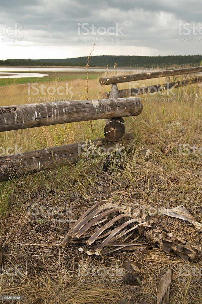 Bones in grassy field royalty-free stock photo