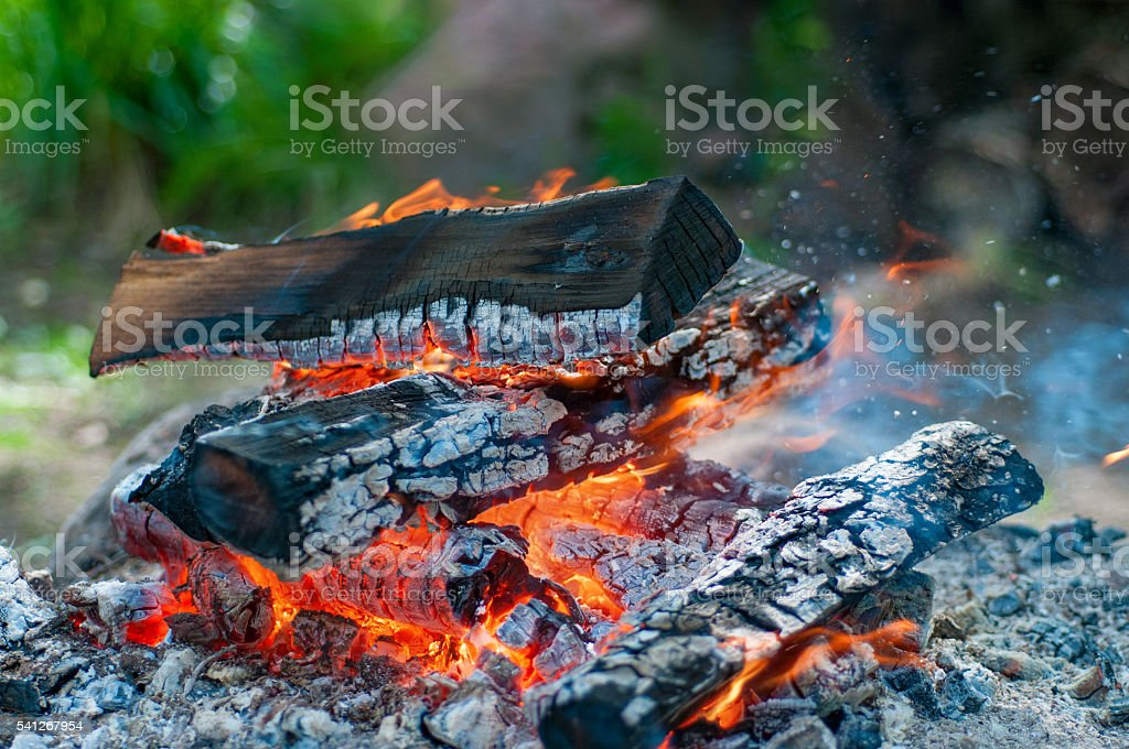 Bonfire. Fire on woods. stock photo