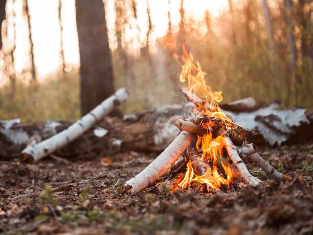 bonfire in forest at sunset - falò foto e immagini stock