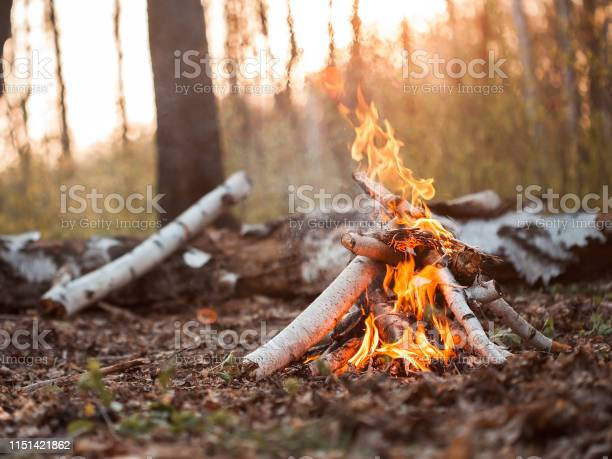 Photo of Bonfire in forest at sunset