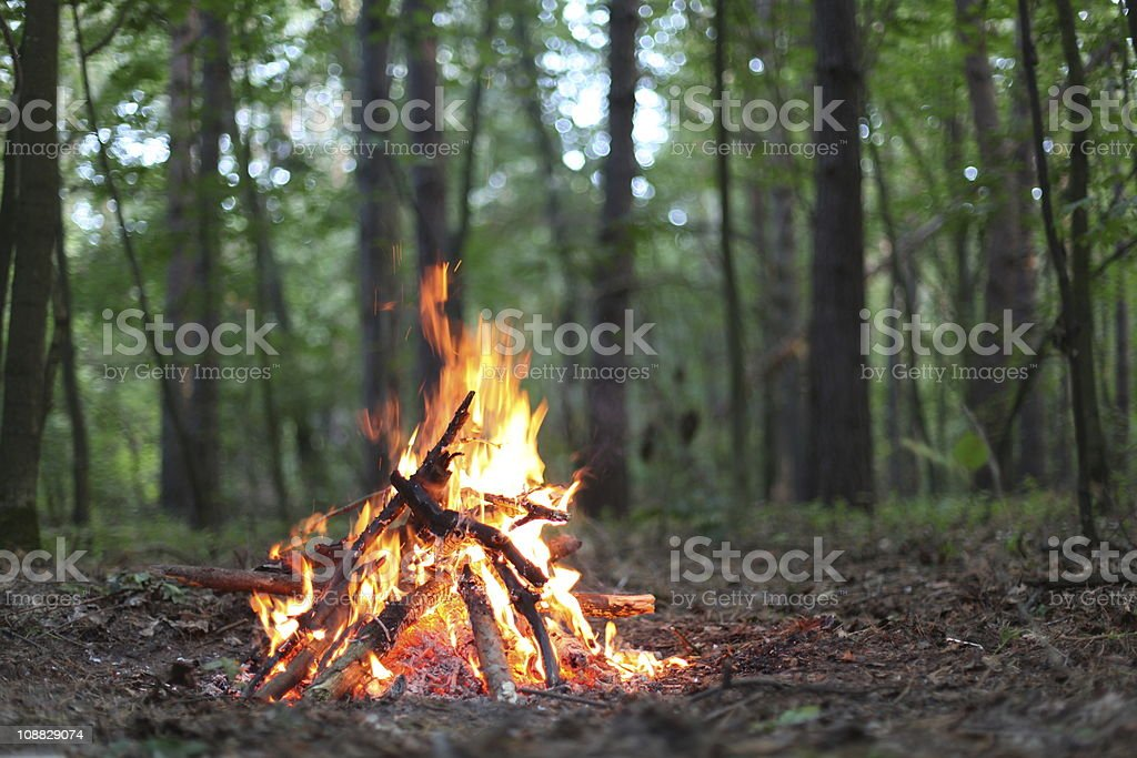 Bonfire in the forest. stock photo
