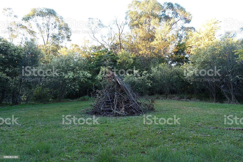 Bonfire night in the making with wattles blooming royalty-free stock photo