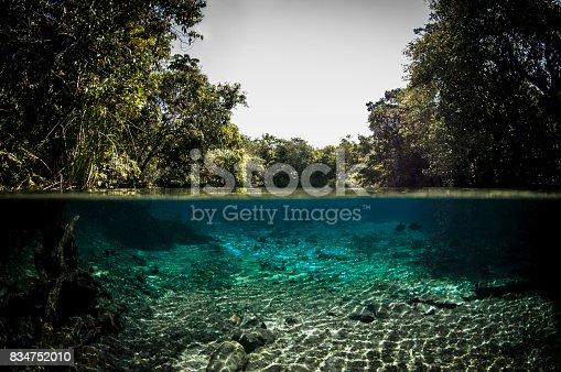 View of the river floor and the 'cerrado' vegetation at Bonito in Mato Grosso do Sul state, Brazil