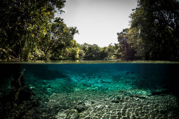 bonito, mato grosso do sul - brazil - ecosystem stock photos and pictures