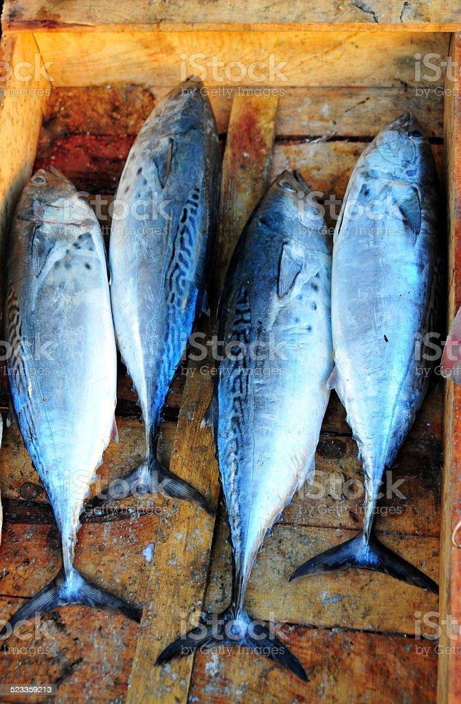 Bonitos at the fish market stock photo