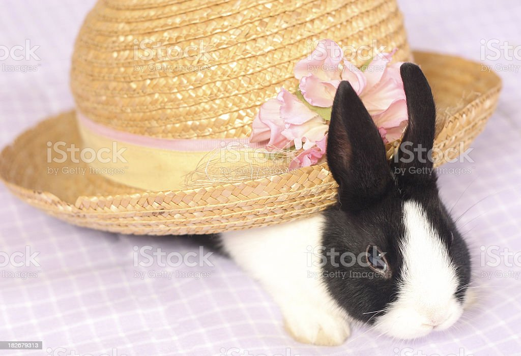 Bonnet Bunny 3 royalty-free stock photo