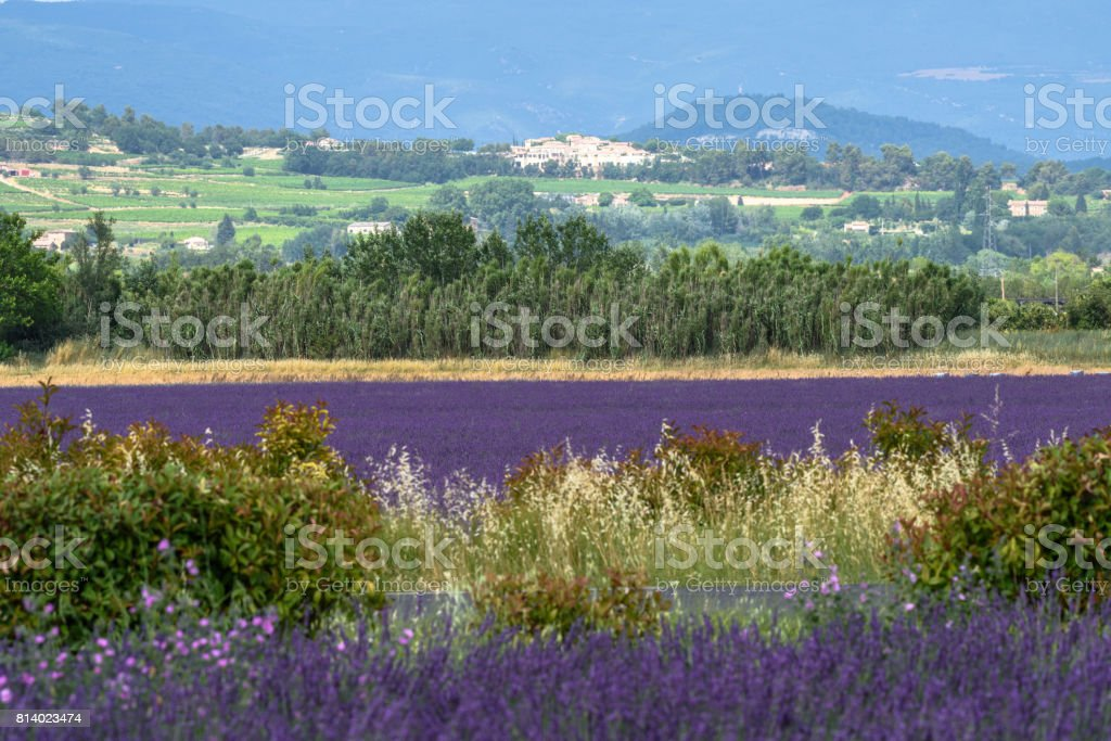 Bonnieux -Lavender fields stock photo