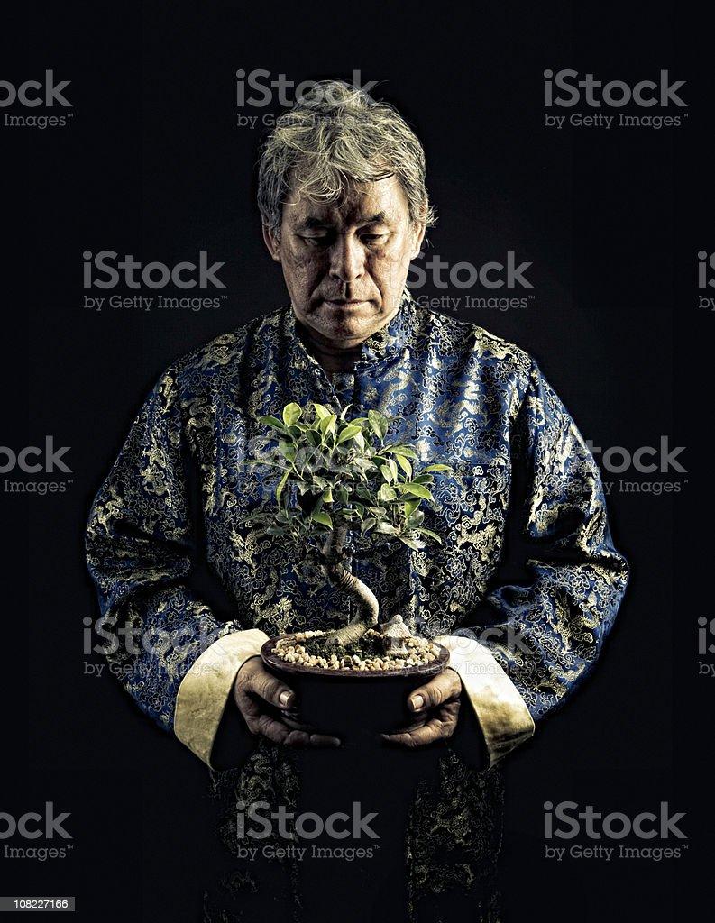 bonsai gift royalty-free stock photo
