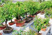 bonsai garden in hangzhou Park