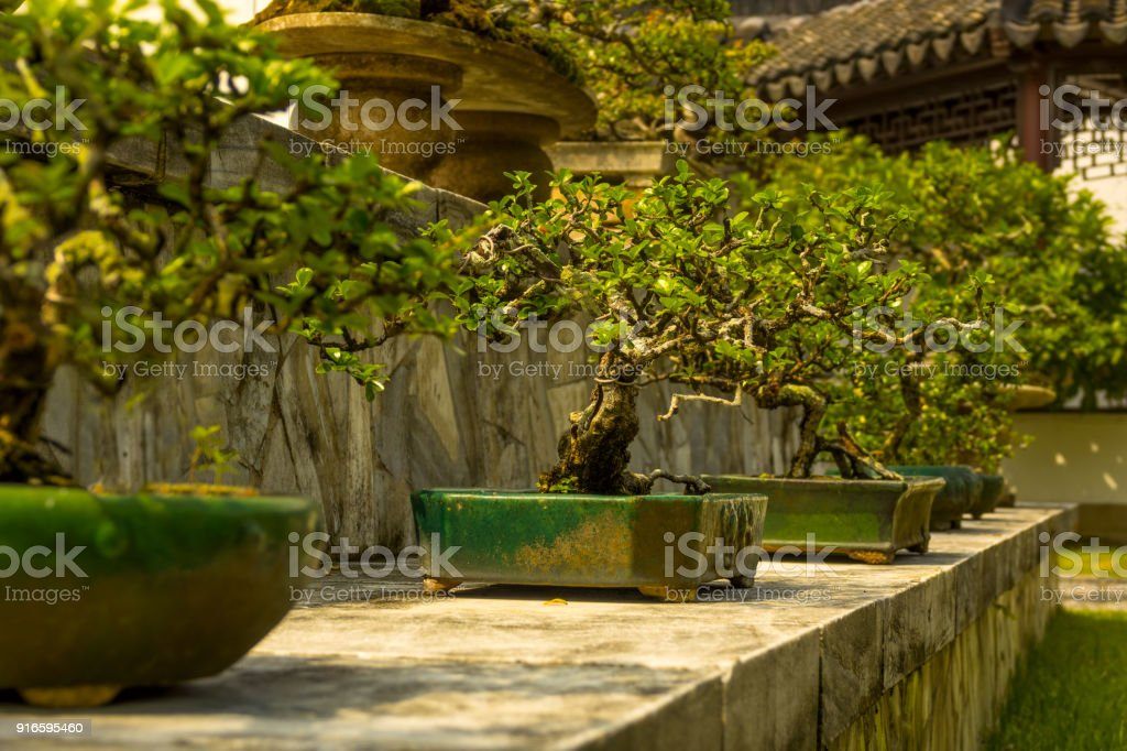 Bonsai in the Japanese Garden of Singapore - foto stock