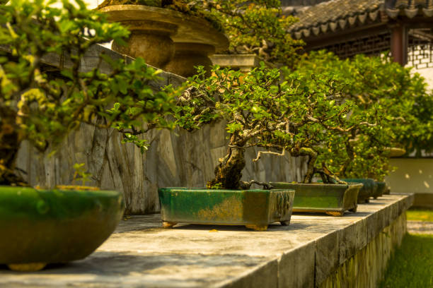 Bonsaï dans le jardin japonais de Singapour - Photo