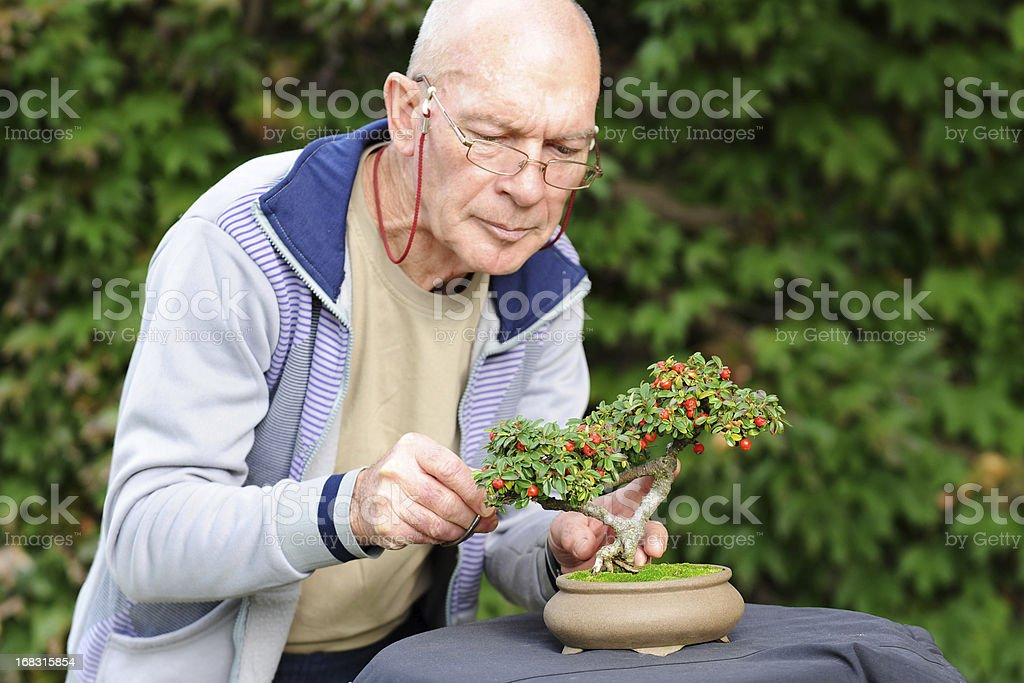 Bonsai Maestro - Photo