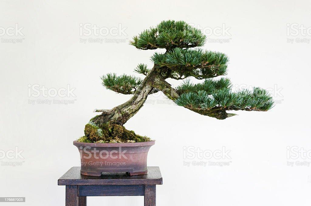 Bonsai – Foto