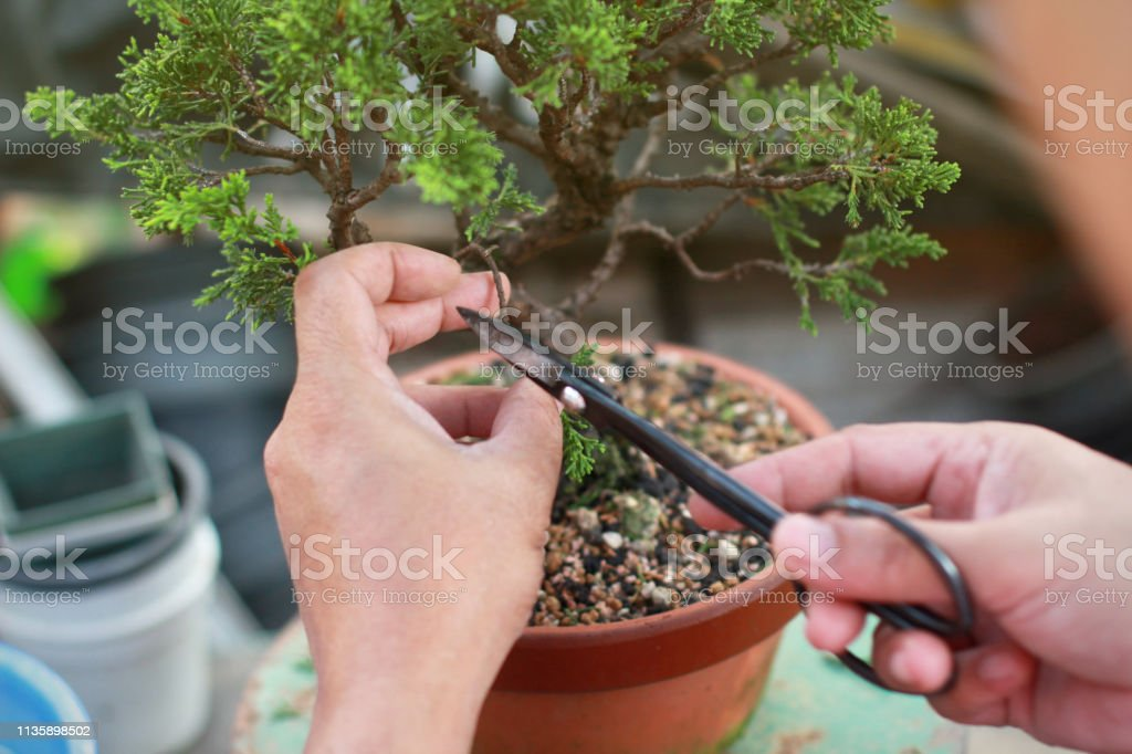 Bonsai Pruning Handmade Accessories Wire And Scissor Bonsai Tools Stock Photo Download Image Now Istock