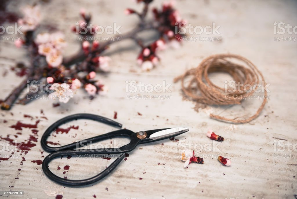 Bonsai scissors with flowering branch on vintage background stock photo