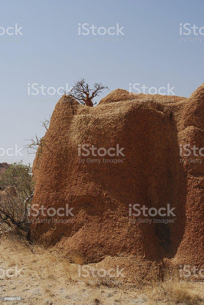 Bonsai sulla roccia royalty free stockfoto