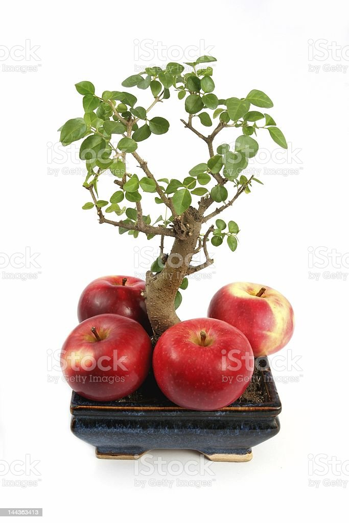 Bonsai Tree And Apples Stock Photo Download Image Now Istock