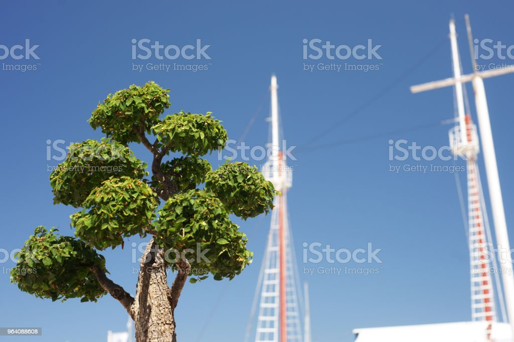 Bonsai tree and ship masts with dark blue sky in background - Royalty-free Blue Stock Photo