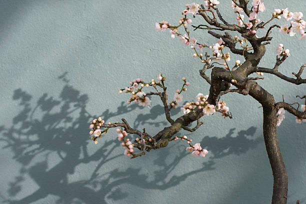 Bonsai tree in Bloom stock photo
