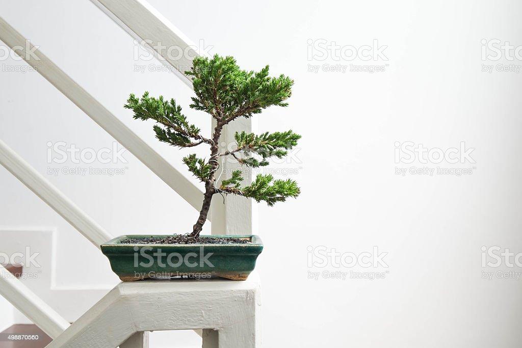 Bonsai, Inneneinrichtung – Foto