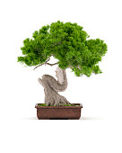 Digitally generated bonsai tree in a ceramic pot isolated on white background.