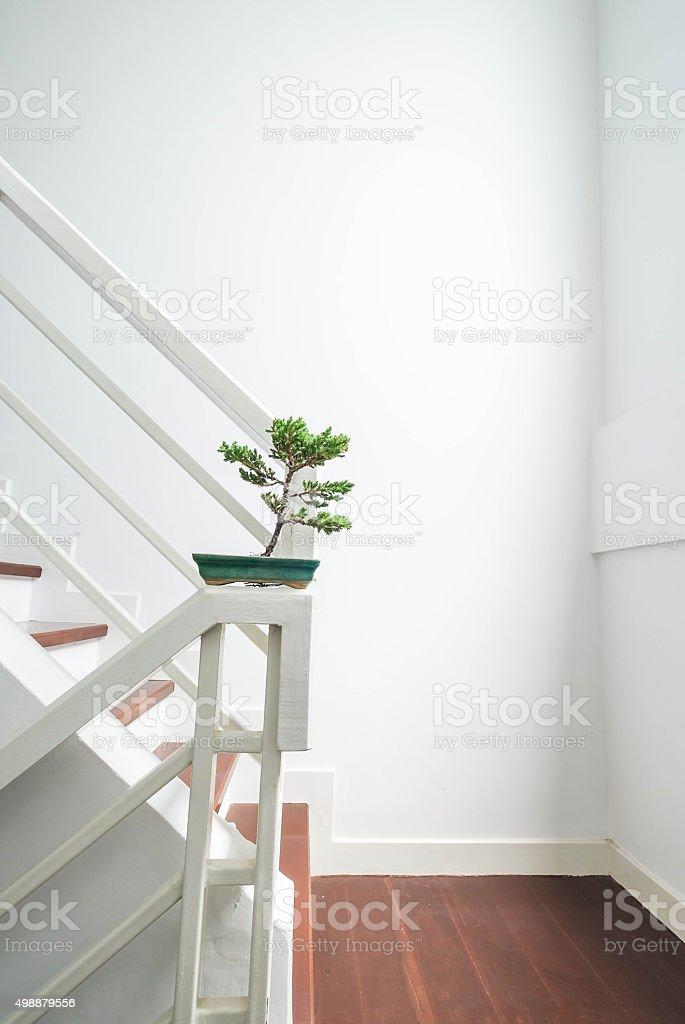 Bonsai auf Treppe, die Innenarchitektur – Foto
