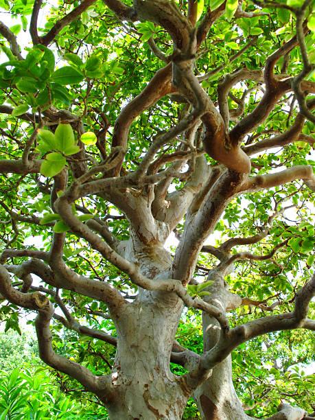 Bonsai Tree stok fotoğrafı