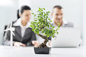 Bonsai tree in the office. Two business people are in the background.