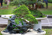 bonsai tree pot on display in the flower festiva