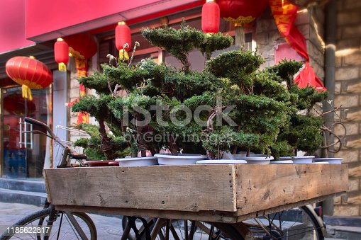 potted pine bonsai trees on the background of the facade of a Chinese building