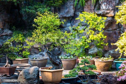 Bonsai trees in a clay pots. Coniferous and deciduous bonsai. Small decorative plants. A sample of landscape art in China. Chinese gardening and landscaping