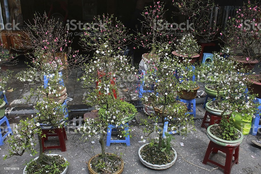 Bonsai trees royalty-free stock photo