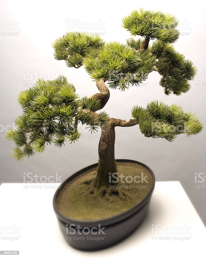 Bonzaii Tree royalty-free stock photo