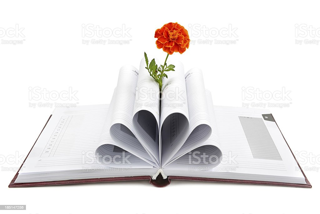 Book and flower royalty-free stock photo