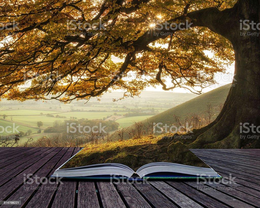 Book concept Stunning Autumn morning sunlight lights landscape t stock photo