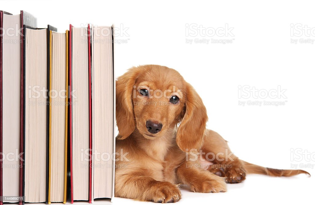 book end puppy royalty-free stock photo