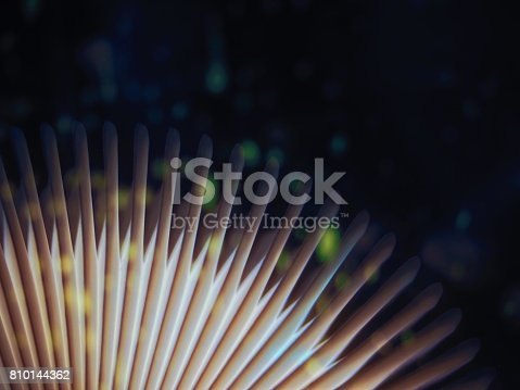 528363897 istock photo Book fantasy fairy tales with firefly and snow cold background 810144362