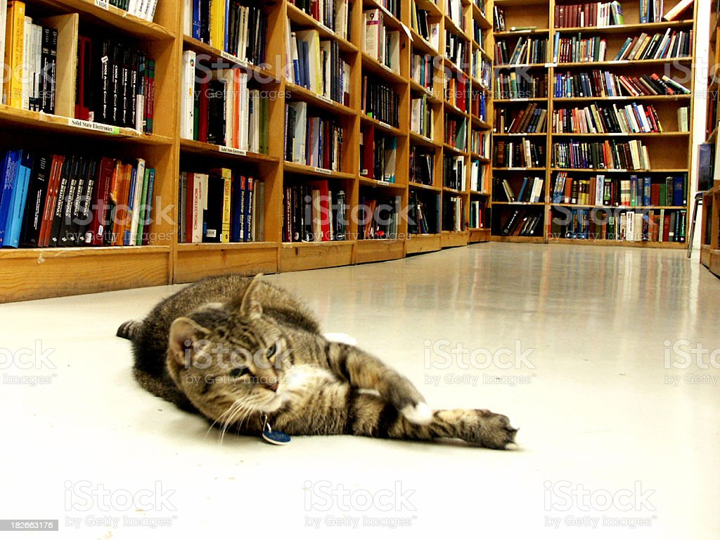 Book Store Feline royalty-free stock photo
