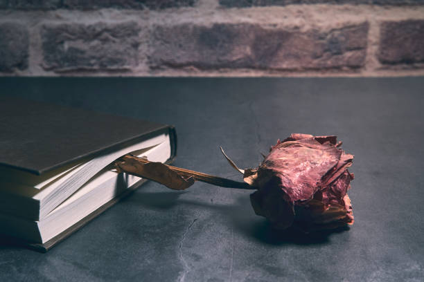 book with a dry red rose between its pages. horizontal stock photo