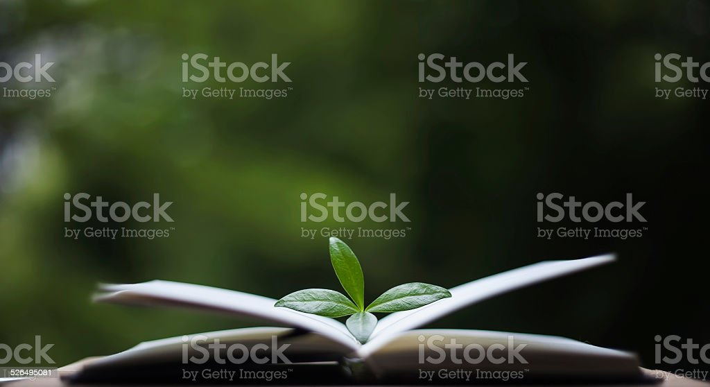 book with leaves on nature background stock photo