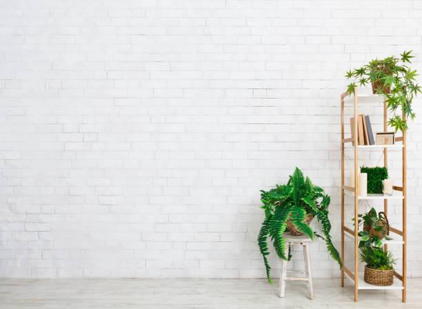 흰 벽에 상록 식물이 있는 책장 - 흰색 벽돌 담 뉴스 사진 이미지
