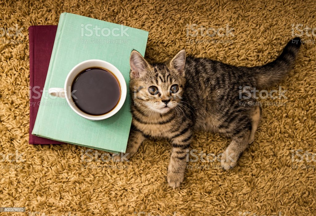 Books, a cup of tea and a little cat on the background of the carpet....