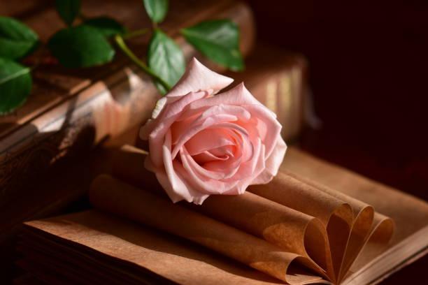 Bücher und schöne rose – Foto