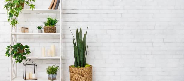 etli ve duvarın üzerinden çeşitli houseplants bookshelf - sulu stok fotoğraflar ve resimler