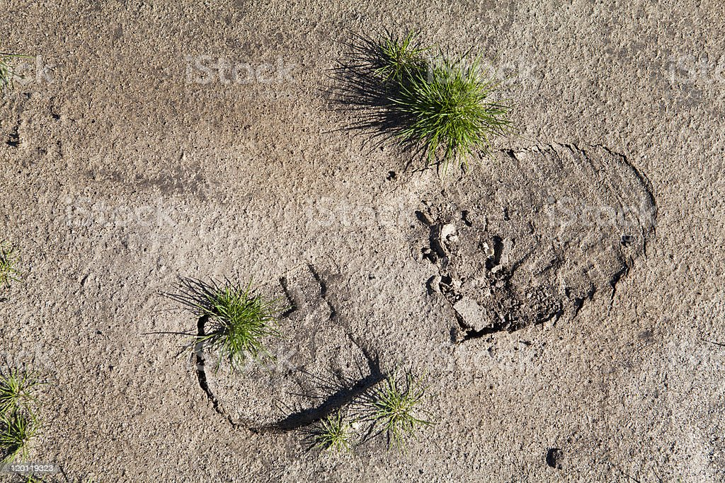 Boot print in desert sand with plants growing through stock photo