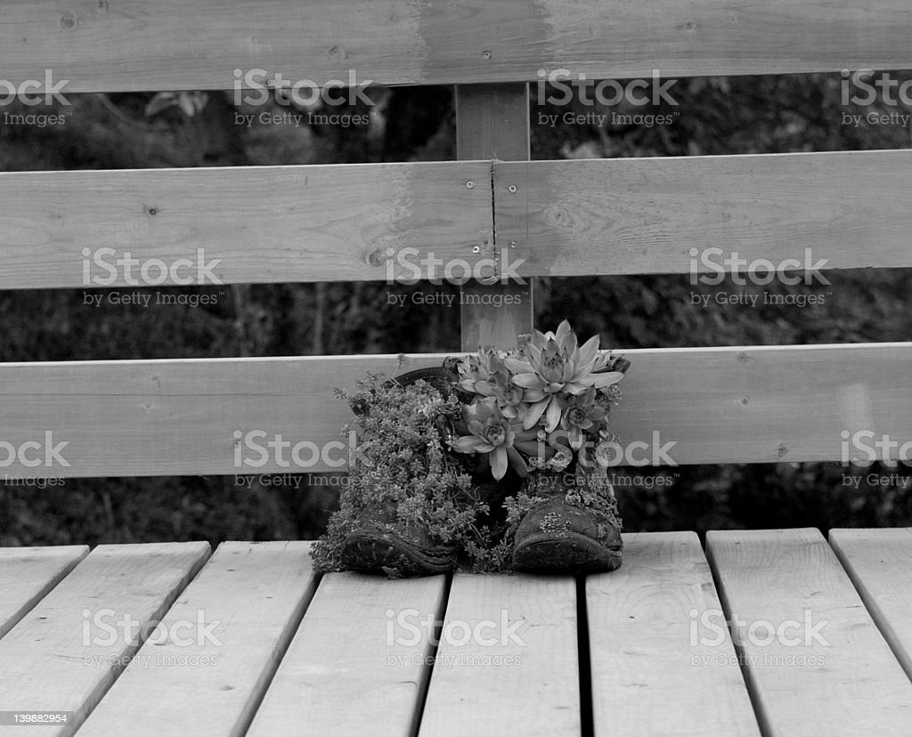 Boots with plants in them royalty-free stock photo