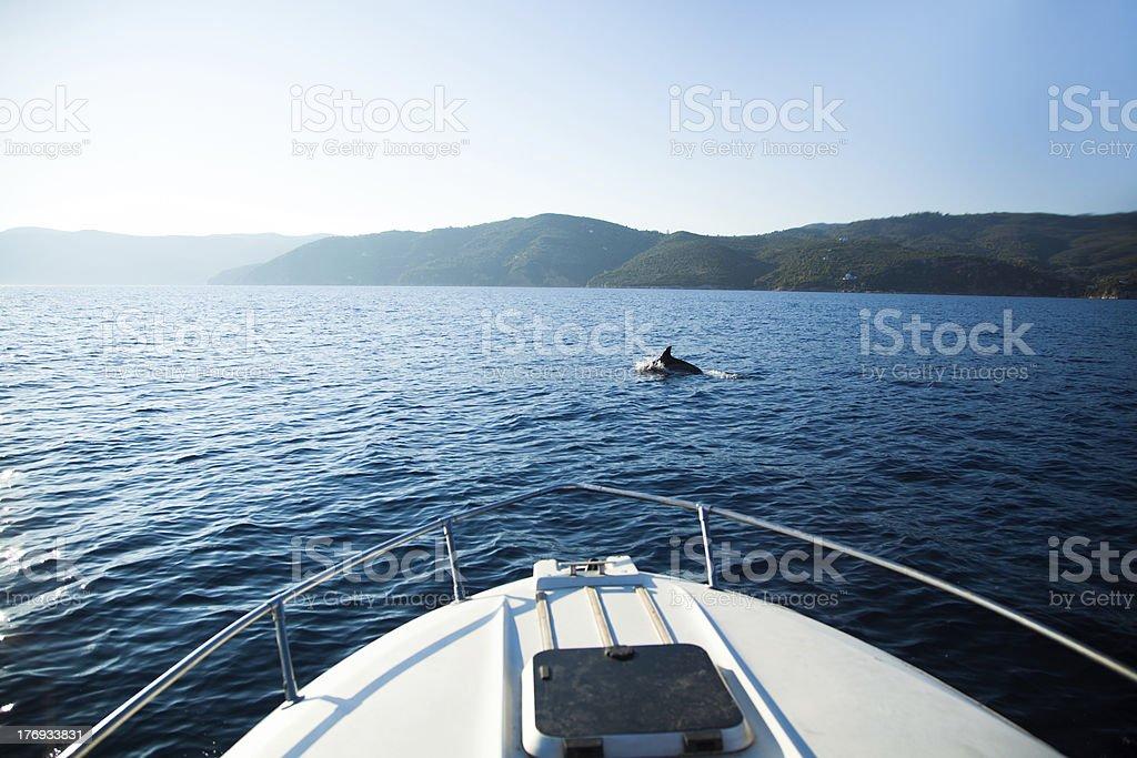Bootsausflug mit Delfin stock photo