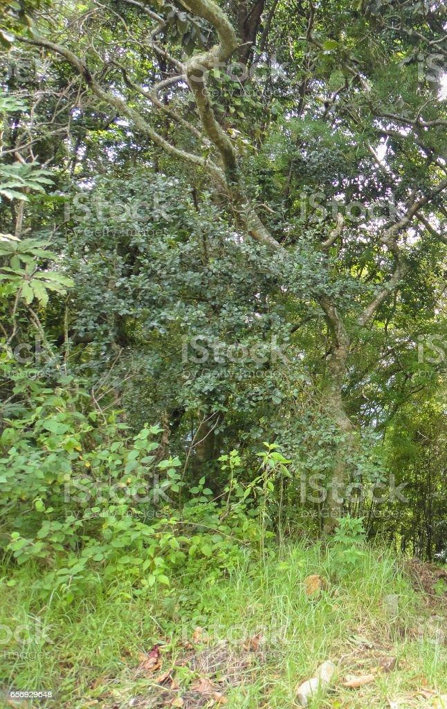 Boquete neighborhoods. Panamanian jungle. Province of Chiricui in Panama - foto de acervo
