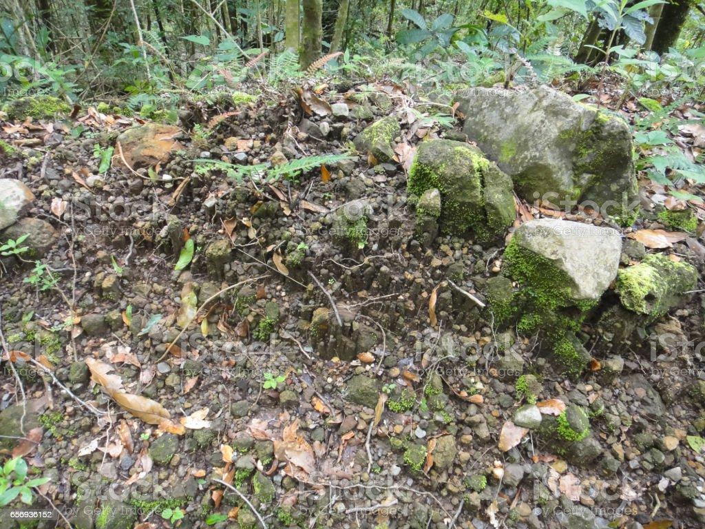 Bairros de boquete. Selva do Panamá. Província de Chiricui no Panamá - foto de acervo